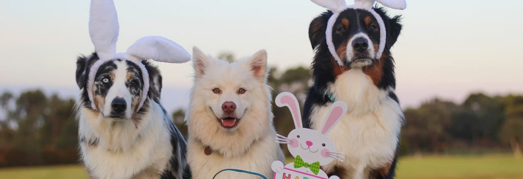 Easter Dog Show March 2018